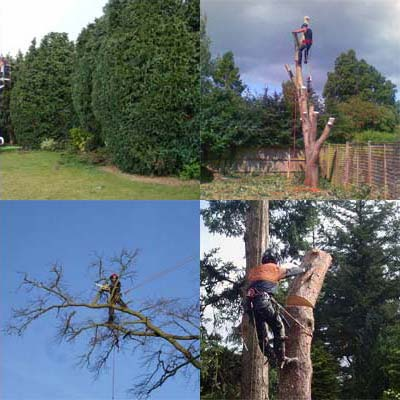 tree surgery images